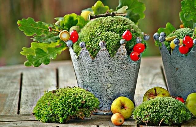 Moos züchten & pflegen